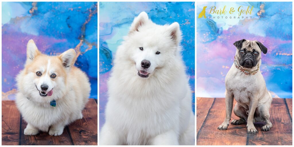 dogs posing in pet photo booth at the 2021 Petagogy Anniversary PAWty