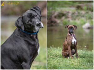 Dugan & Brady's Album-Worthy Spring Session - Beaver County Dog Photography