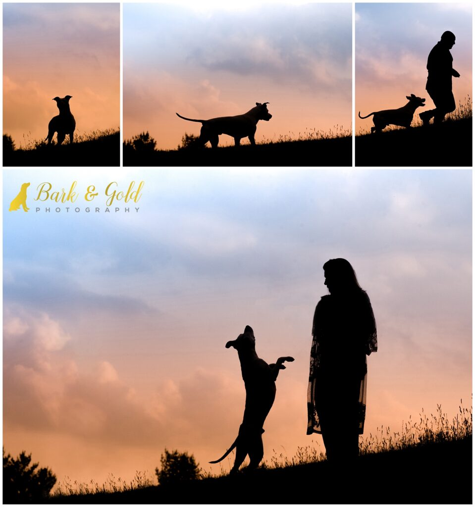 senior pit bull with owners in a field at sunset for silhouette portraits at Mingo Creek Park